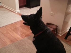 Joan & Jack's dog, Max