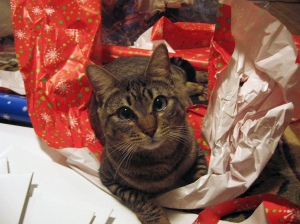 A cat, sitting on top of wrapping paper, staring up at viewer.